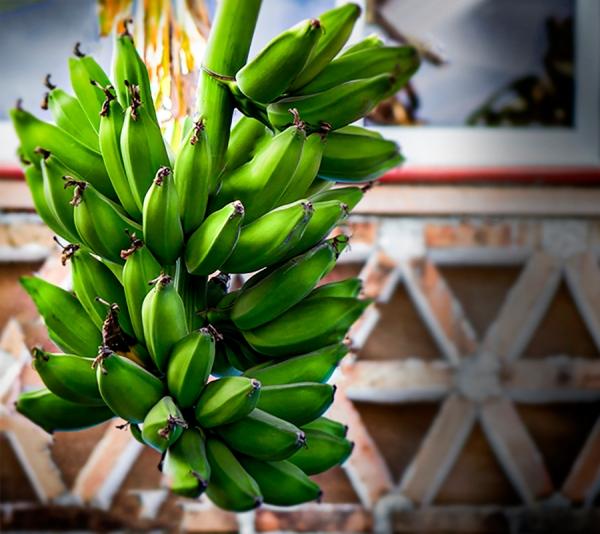Watching The Banana's Grow